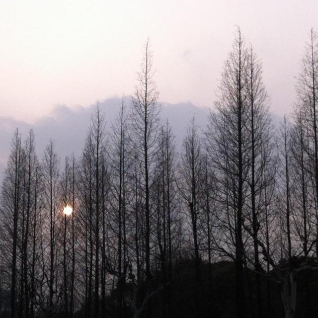 怪蜀黍渣翻唱-喜马拉雅fm