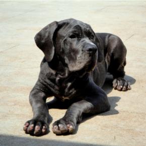 抑郁症这条黑狗-喜马拉雅fm