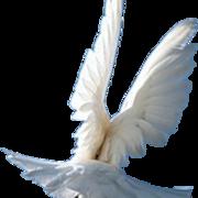 江秀琴——祷告