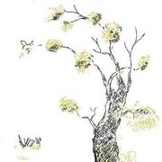 邂逅一树诗情