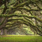 日常中的雨林