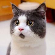 【猫猫脱口秀】114、你妈老觉得你嫁不出去是怎样一种体验?