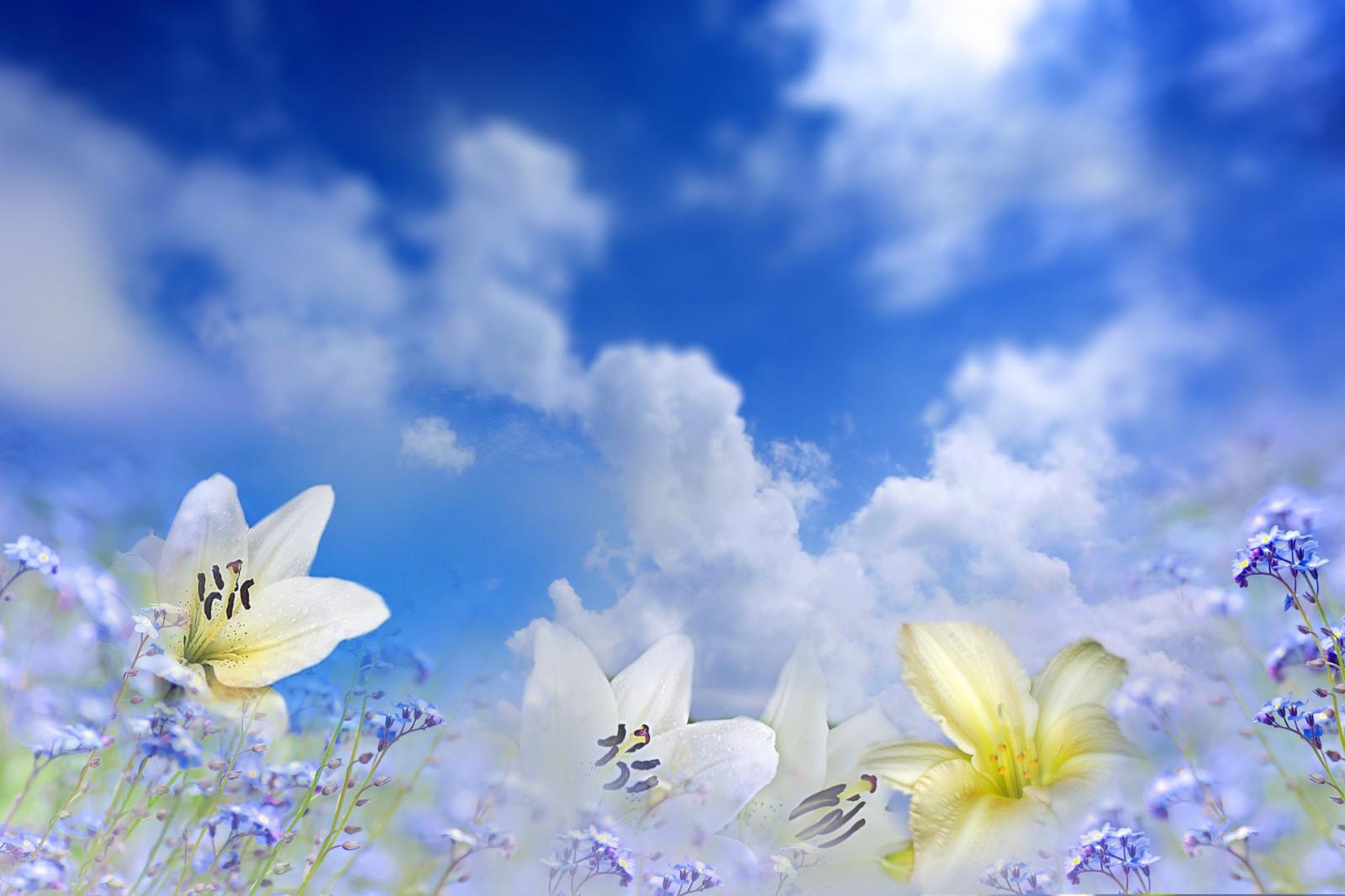 手工制作赞美祖国花