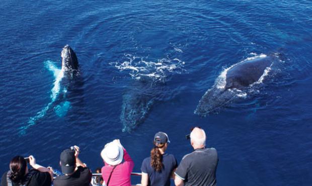 除了众多的海洋生物,这里还有很多游乐设施