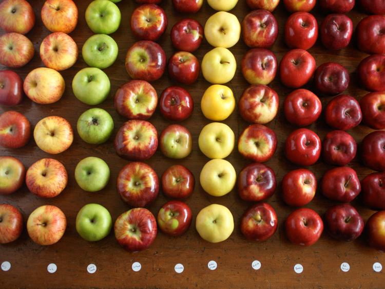 各种苹果.jpg