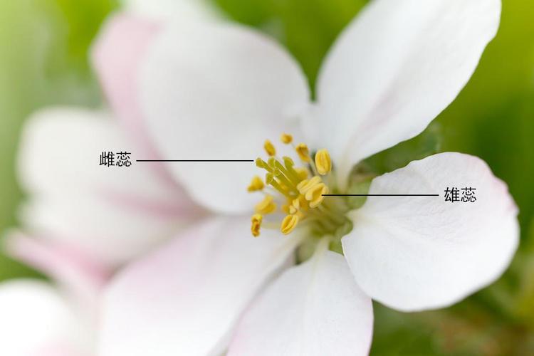 雄蕊雌蕊1.jpg