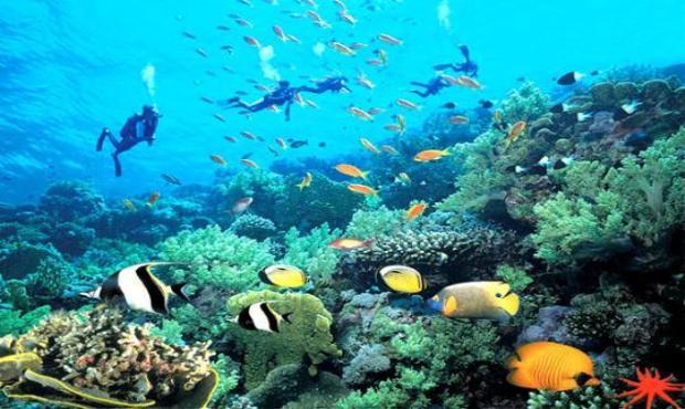海洋动物的气球