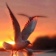 飞翔的翅膀(作者:沉淀)-喜马拉雅fm