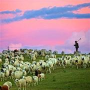 63:我们在钢筋水泥的城市吸霾,他在经幡飞舞的草原放羊