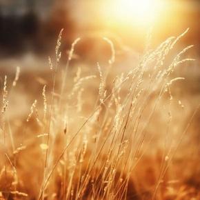 莹莹白兔青春散文诗之故乡的味道-喜马拉雅fm