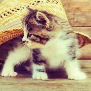 菁菁的猫耳朵-喜马拉雅fm