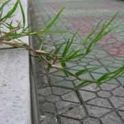 一棵静草-喜马拉雅fm