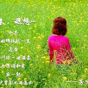 410《春,遐想……》--芳子(枫叶下的玫瑰诵读201703250932)