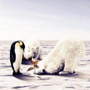 【地理探索者】南极冷还是北极冷?(微信订阅号:择信传媒)