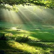 乔瓦尼乐队-奇妙的早晨