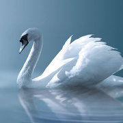 志国推荐版圣桑-天鹅(选自动物狂欢节)