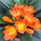 西楚花卉刘1391822036