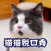 【猫猫脱口秀】你觉得最提神醒脑的一句话是什么?-喜马拉雅fm