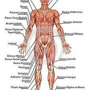神经系统(第十六章、第十七章)