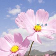 花开花谢都是风景