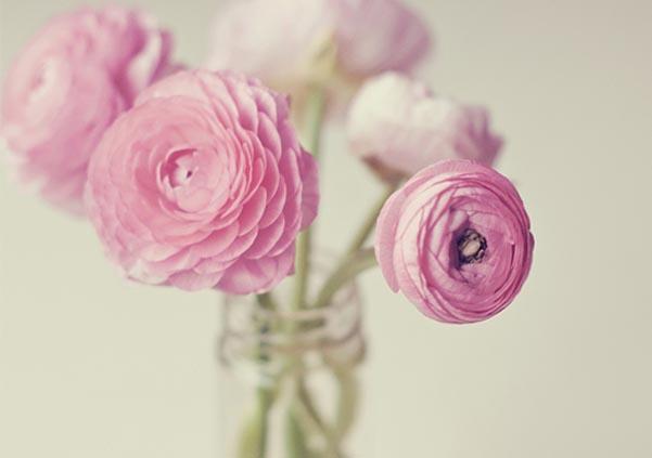 春天的第一朵鲜花启示