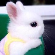茕茕白兔腹黑成妖