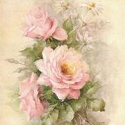 蔷薇笔迹-喜马拉雅fm