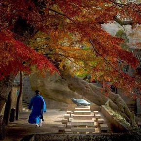 《顶仙传奇之东北仙家往事》-喜马拉雅fm