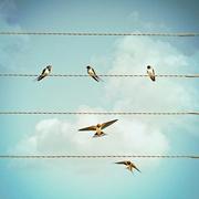 Swallows in Summer-喜马拉雅fm