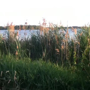 【一个人的黄昏】沉淀(荷兰)-喜马拉雅fm