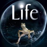 互动问答:生命是怎么起源的?