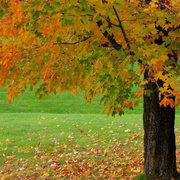 秋天,秋天-喜马拉雅fm