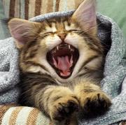 热情小肥猫