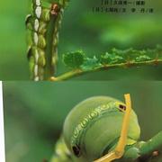 亲亲自然-小青虫-喜马拉雅fm