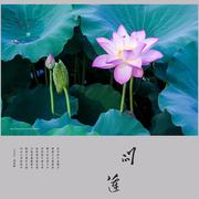 【音乐你好】第十期 《问莲鱼说》-喜马拉雅fm