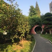校园的桂花树(傅元璟同学的习作)-喜马拉雅fm