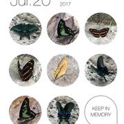 法布尔昆虫世界第一卷-螳螂精美卵鞘-喜马拉雅fm