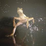 25.水上漂蜥蜴-喜马拉雅fm