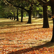 初秋时节是不是有利于补肾呢-喜马拉雅fm