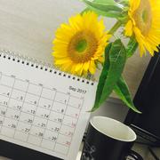 最美的迎春花-喜马拉雅fm