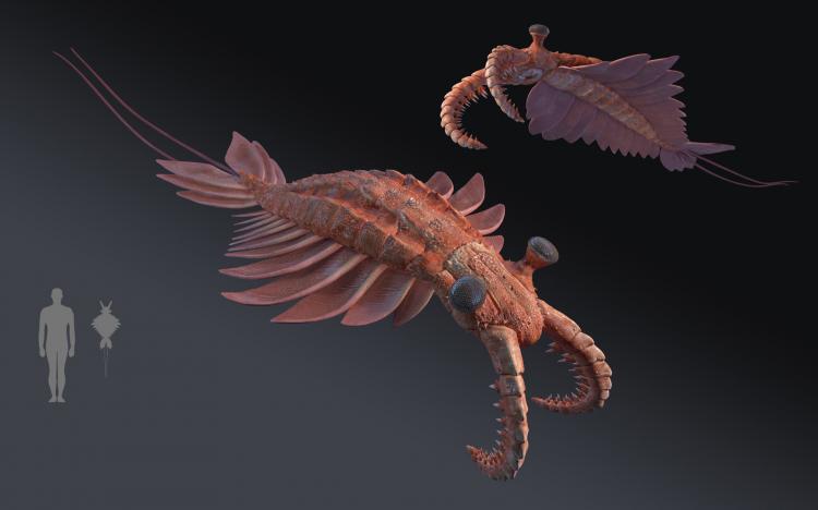 奇虾2.jpg