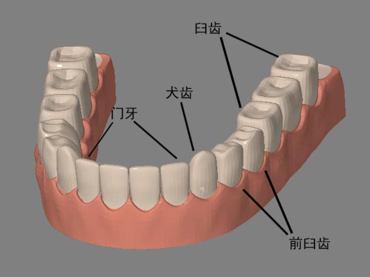 排牙.jpg