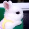 兔兔有话说-喜马拉雅fm