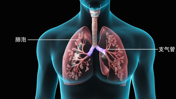 肺.jpg