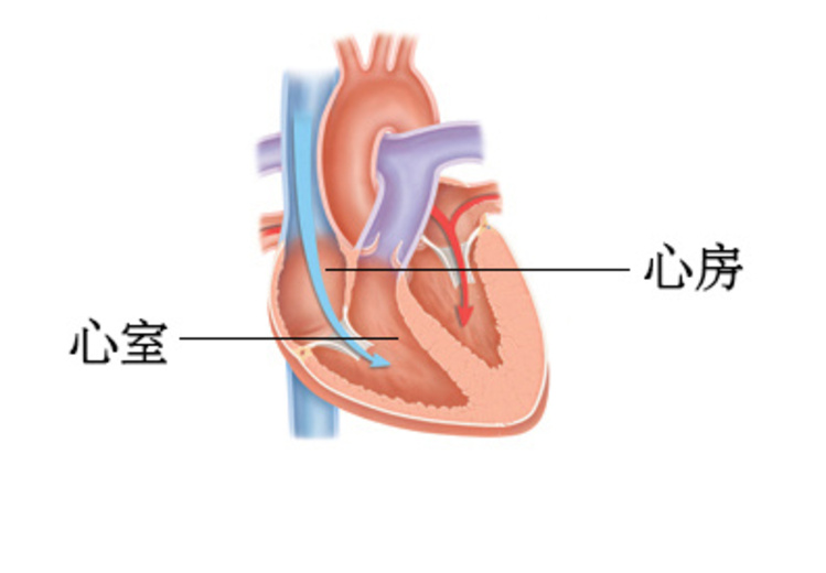 解剖图.jpg