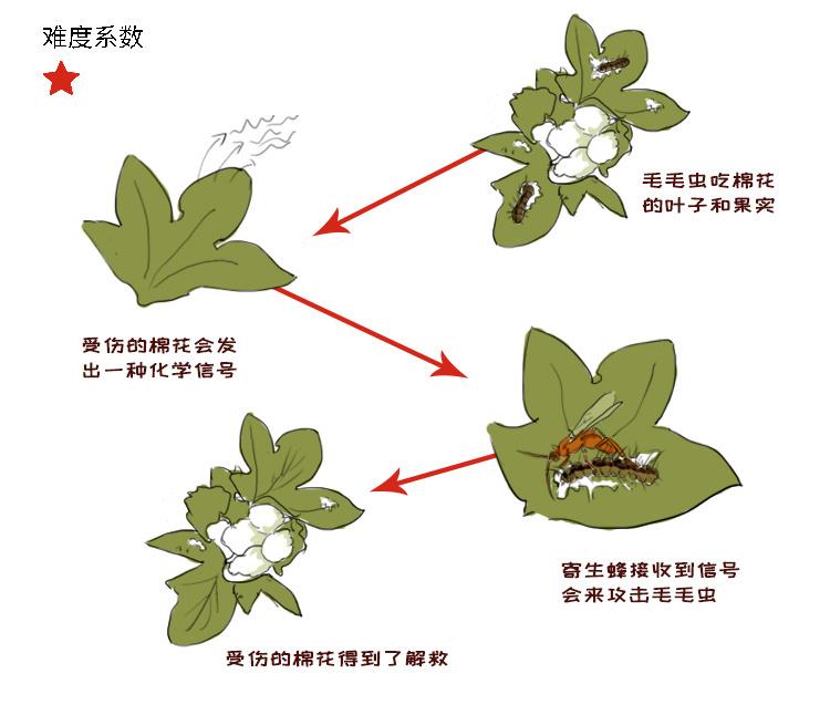 植物7.jpg