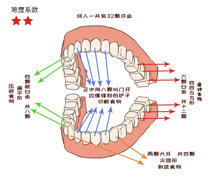 人体1.jpg