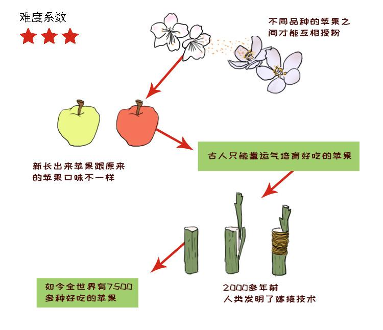 植物5.jpg