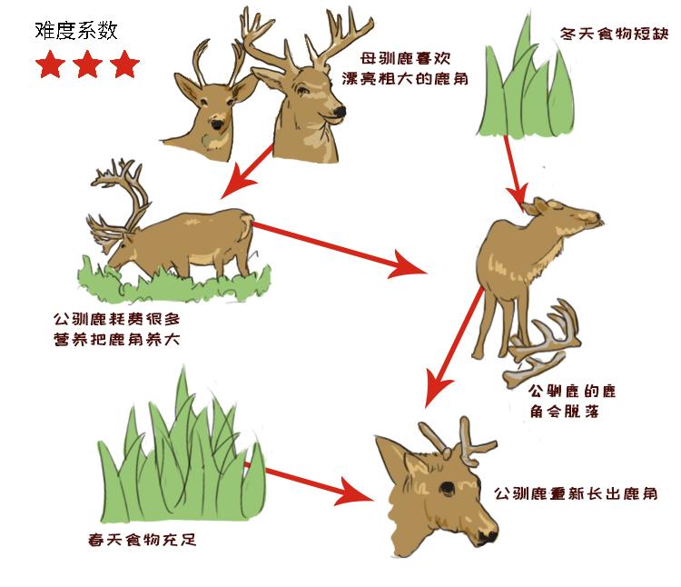 动物4.jpg