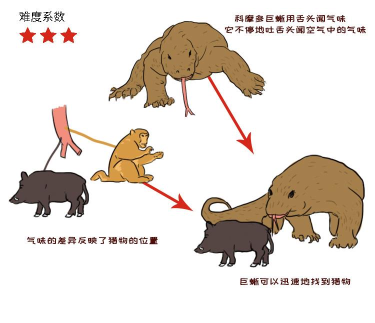 动物3.jpg